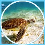 Offerte-Viaggi-di-nozze-Seychelles