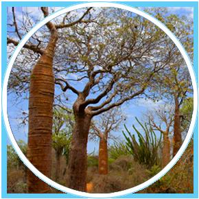 Madagascar-zona-sud