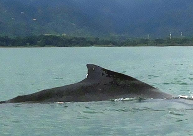 avvistamento-balene-uvita-costa-rica