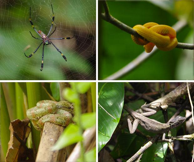 animali-tortuguero-costa-rica