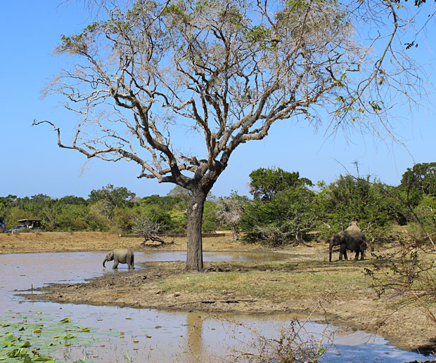 Cosa-Vedere-in-Sri-Lanka-Safari-Yala