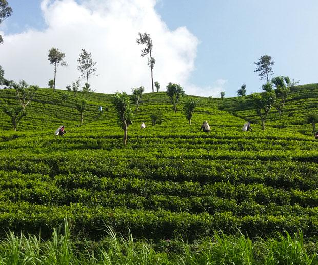 Cosa-Vedere-in-Sri-Lanka-hill-country