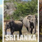 Consigli per Organizzare un Viaggio in Sri Lanka