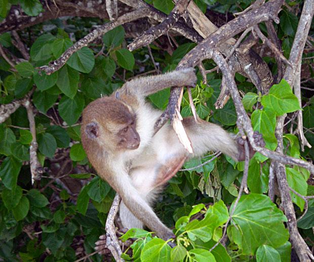 Monkey Beach Phi Phiisland