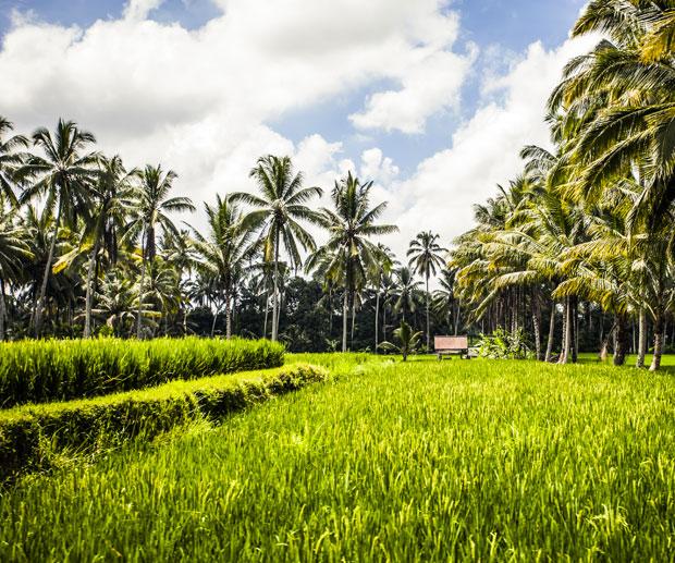 Cosa Vedere a Bali terrazze di riso